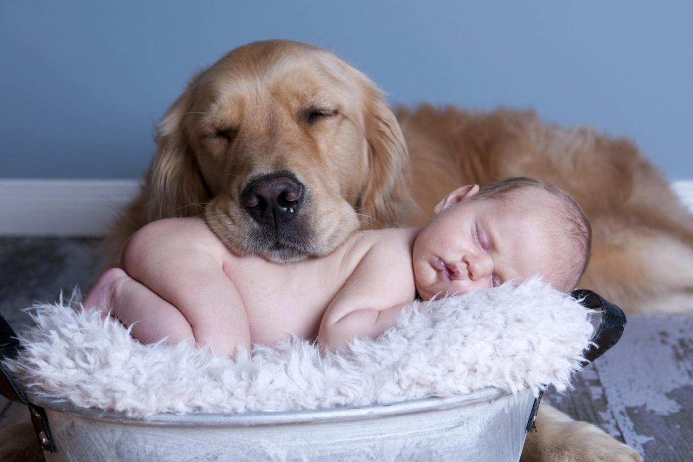 польза домашних животных
